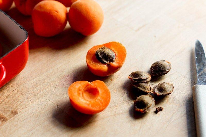 Как посадить абрикос из косточки на даче в открытом грунте выращивать и ухаживать за ним