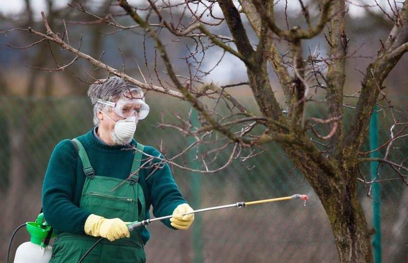 Обработка яблонь купоросом