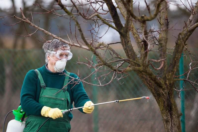 Обработка деревьев осенью от вредителей медным купоросом