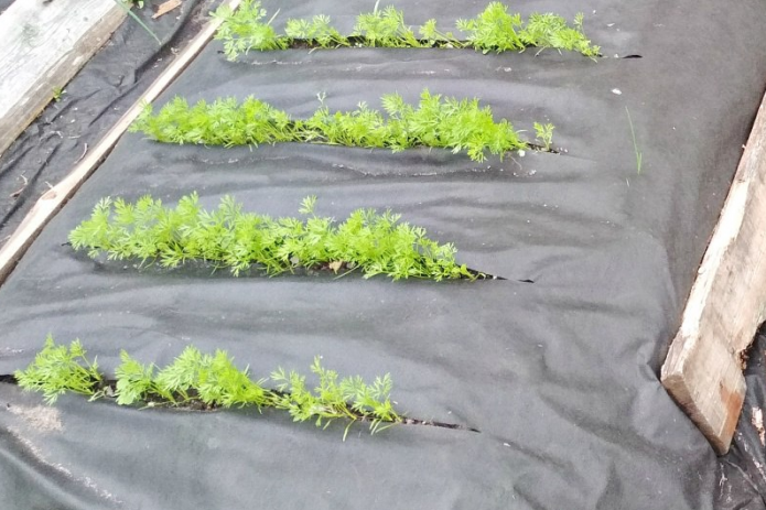 Прорези в спанбонде для зелени