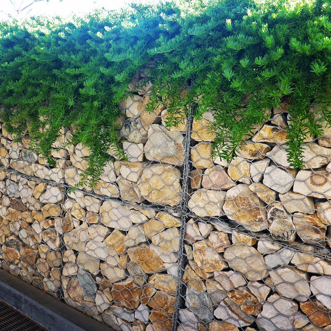 Подпорная стенка из габионов с ампельными растениями