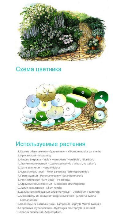 схема цветника с калиной