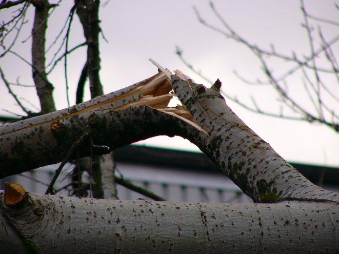 Сломанная ветка на дереве
