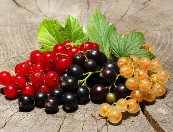 Смородина разная, чёрная, белая, красная — какая полезнее?