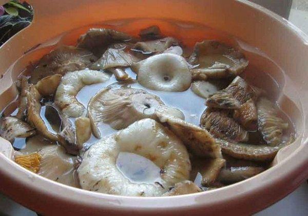 Отмачивая грибов