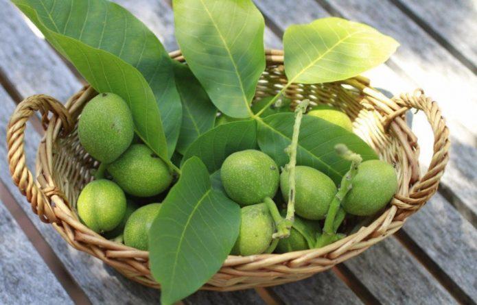 Незрелые грецкие орехи