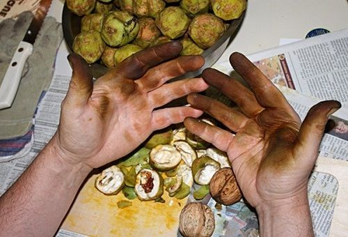 Пятна на руках после чистки зелёных грецких орехов