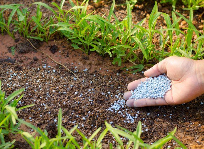 Внесение гранулированных удобрений