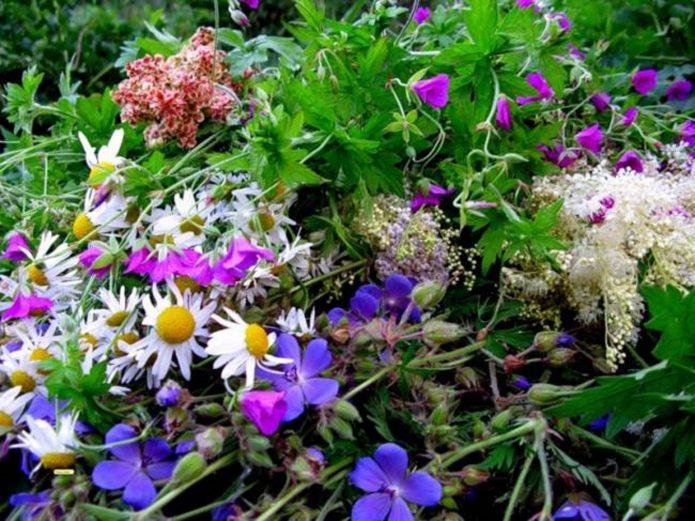 Купальские целебные цветы