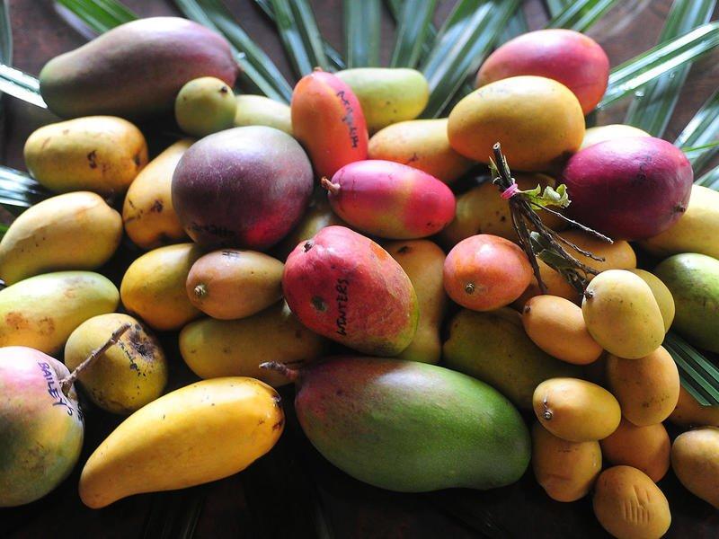 Полезные и опасные свойства манго