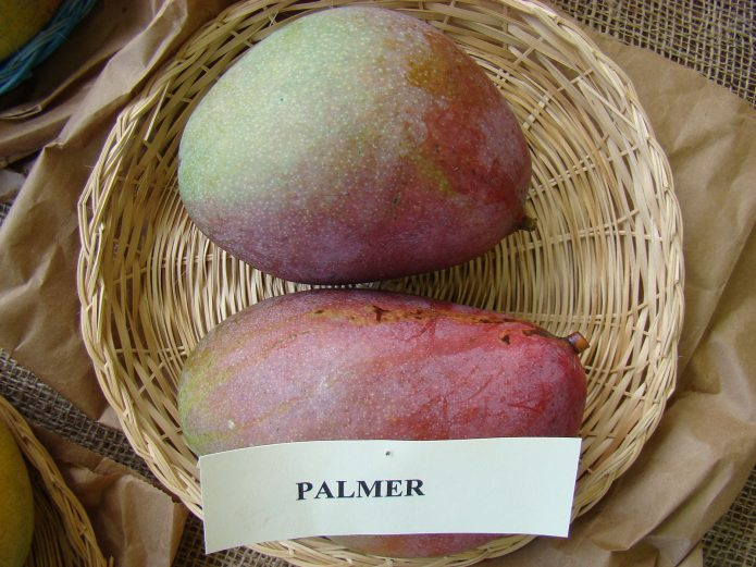 Манго Palmer