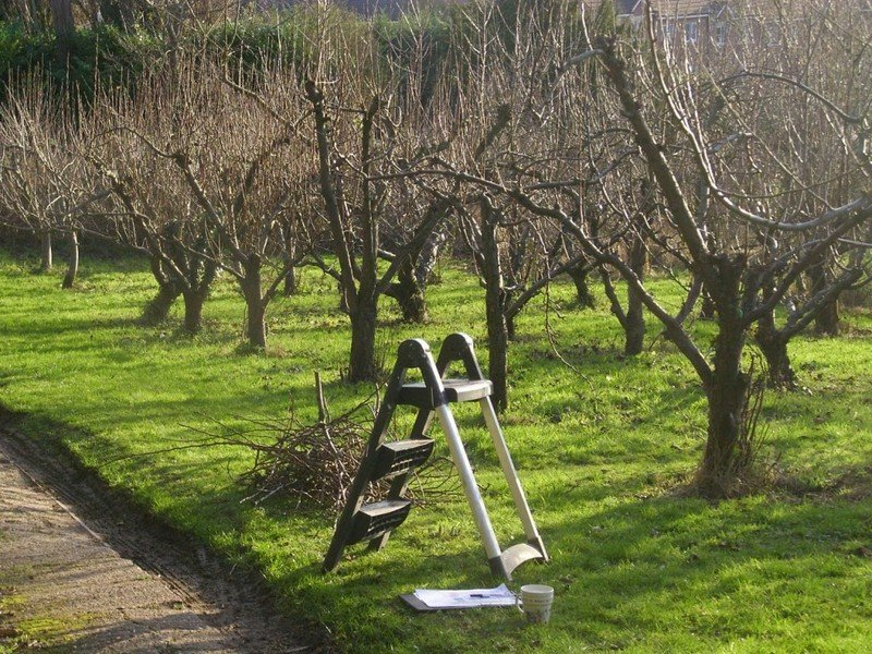Обрезка яблонь осенью для начинающих в картинках