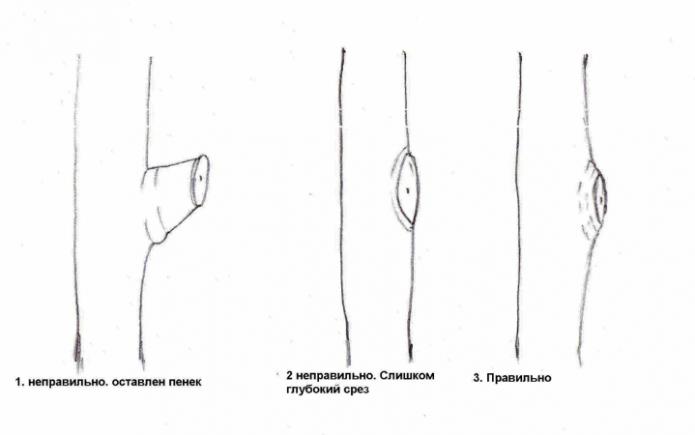 Варианты обрезок деревьев