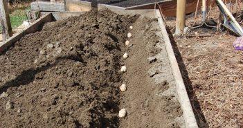посадка картошки осенью