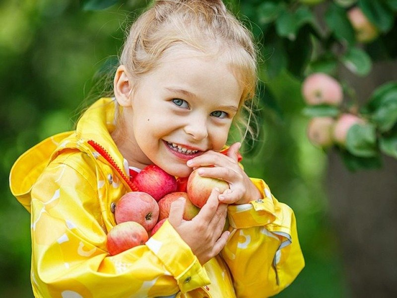 Сорт яблок красное зимнее сладкое