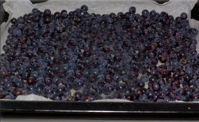 Рассыпной виноград на застеленом пергаментом противне