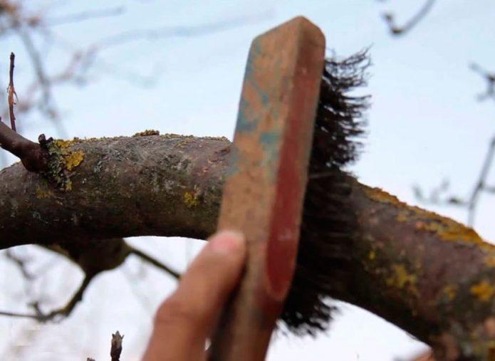 Очистка ветвей дерева