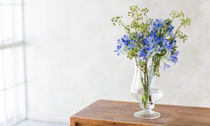 агапантус в вазе