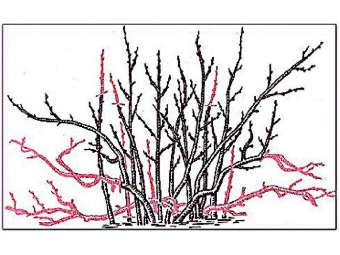 Удаление старых ветвей
