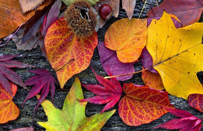 Осенние листья разных деревьев