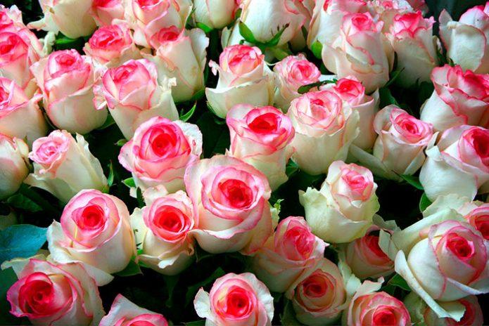 Срезанные розы Дольче Вита