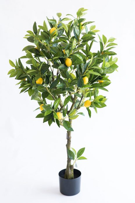 lemon home tree