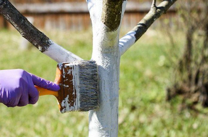 Подготовка плодового дерева к зиме