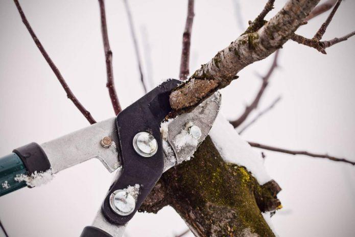 Позднеосенняя обрезка садовых деревьев