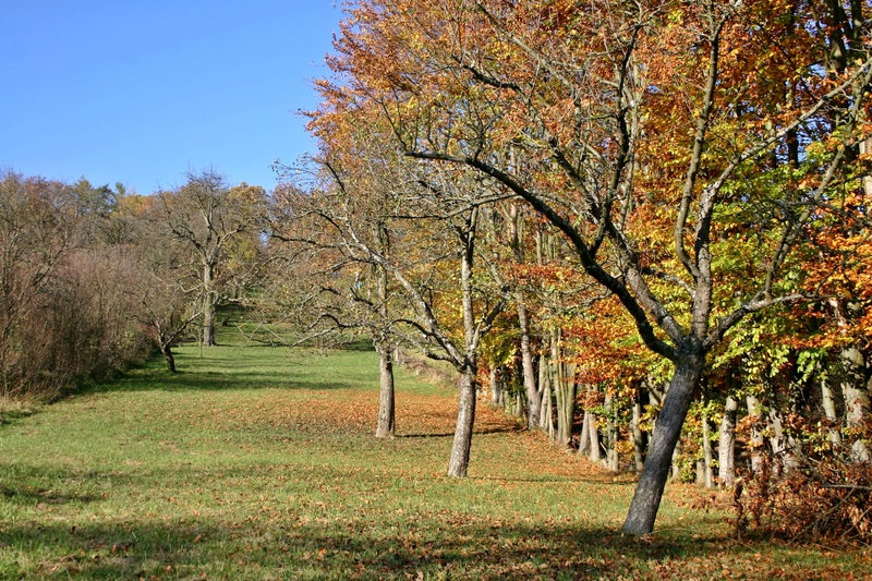 Как ухаживать за яблоней – полное руководство от «Зеленой грядки»