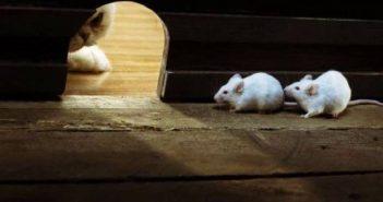 Мыши в норе
