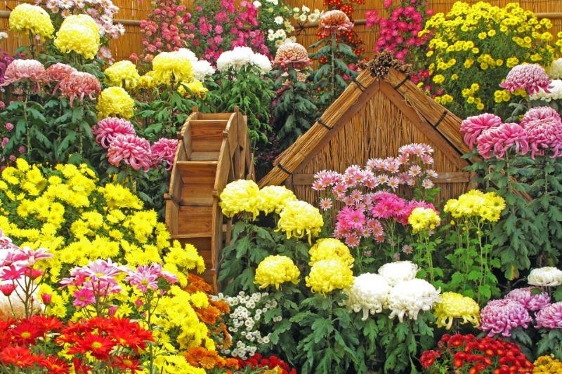 Как подготовить цветник к зимовке