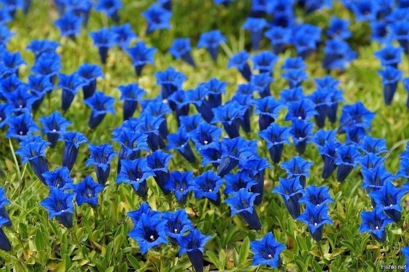 Какие цветы высаживают под зиму