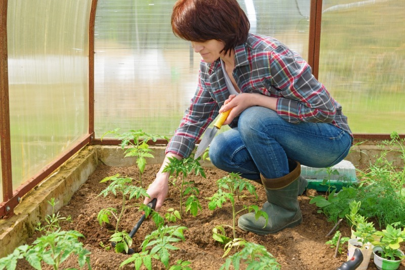 Как выращивать рассаду в теплице