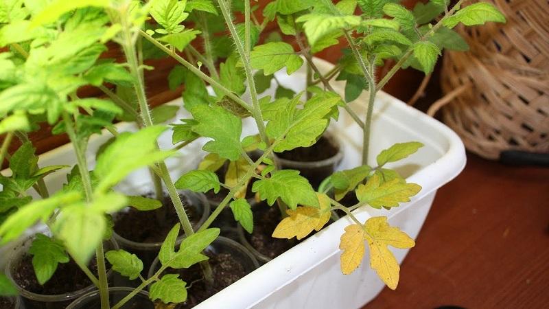 Растение желтее