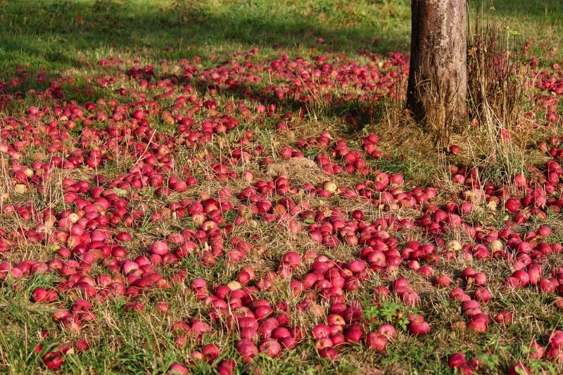 Что нужно закопать в саду осенью для повышения урожайности