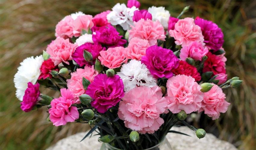 Список цветов, которые долго стоят в вазе. ТОП видов самых стойких