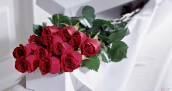 Сколько роз можно дарить: девушке, на день рождения и по другим поводам