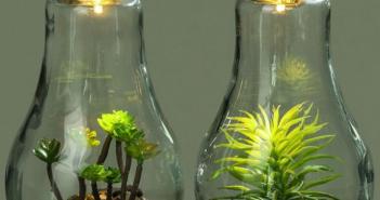 Флорариум с суккулентами своими руками — пошаговая инструкция
