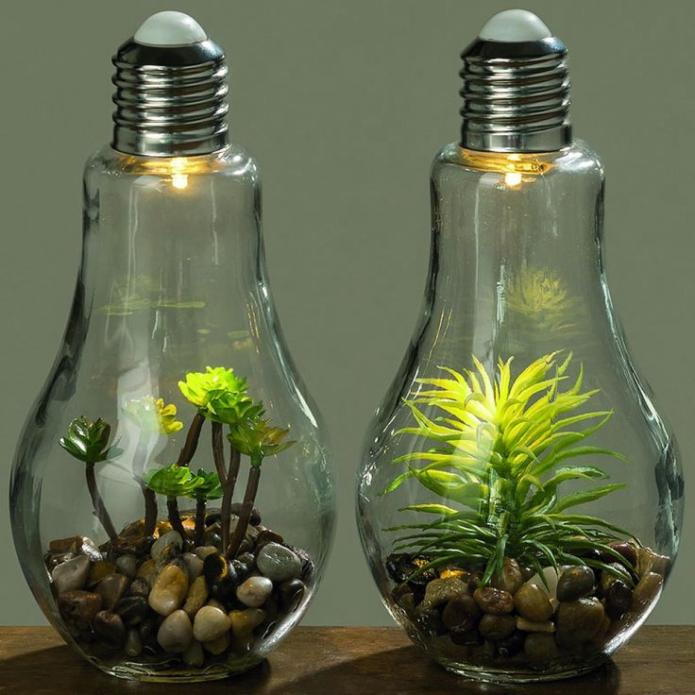 Лампочки с суккулентами