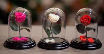 Стабилизированные цветы своими руками в домашних условиях