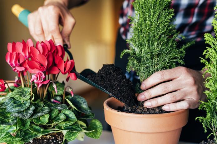 Перевалка комнатных растений