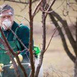 Как лучше опрыскивать деревья осенью перед зимой: по листьям или после листопада