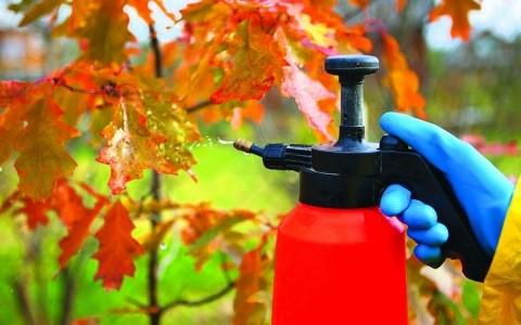 Осенняя обработка сада мочевиной: плюсы и минусы, инструкция и отзывы