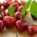 Обрезка вишни — можно ли обрезать летом после плодоношения, и как правильно это сделать